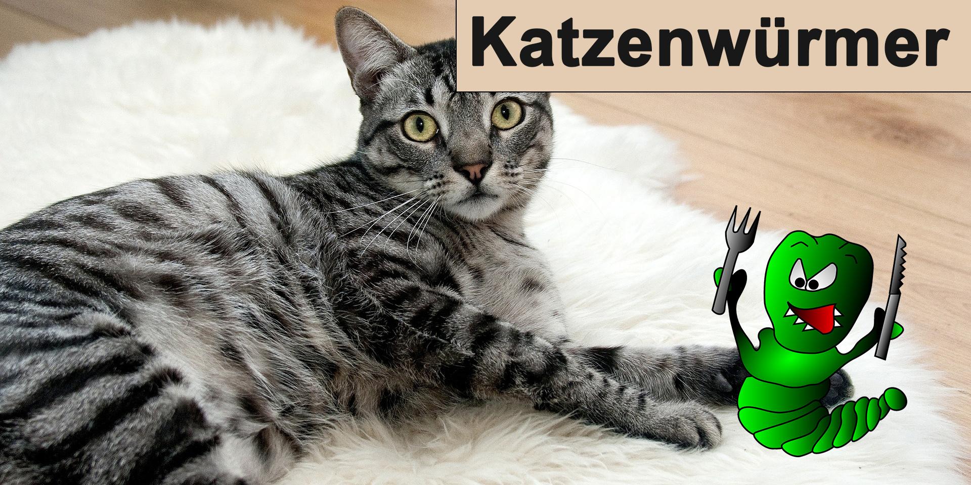 Würmer bei Katzen